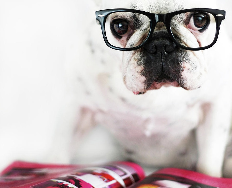 dog with glasses - 747×774